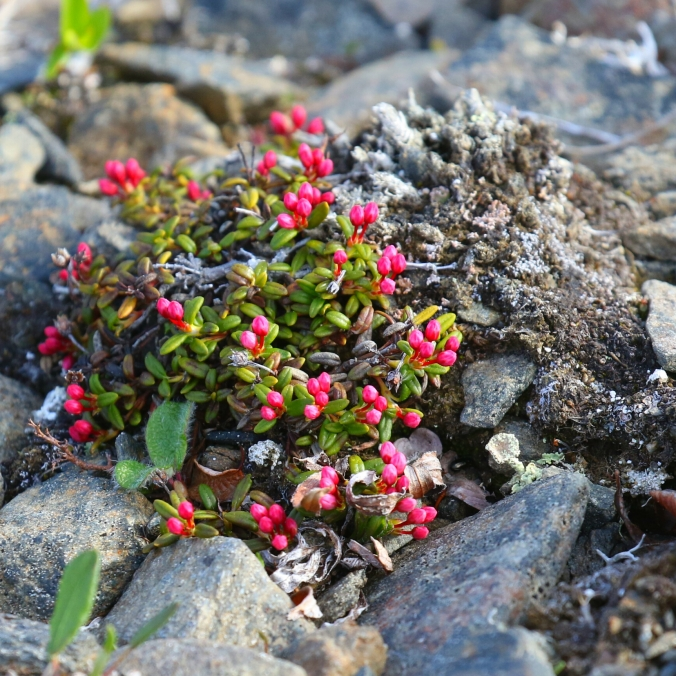 Small Red Flowers