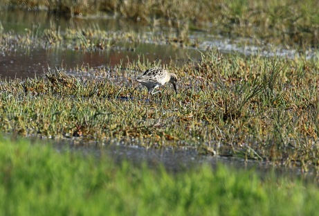 first-view-of-ruff