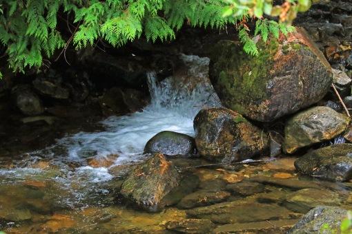 harvey-creek1