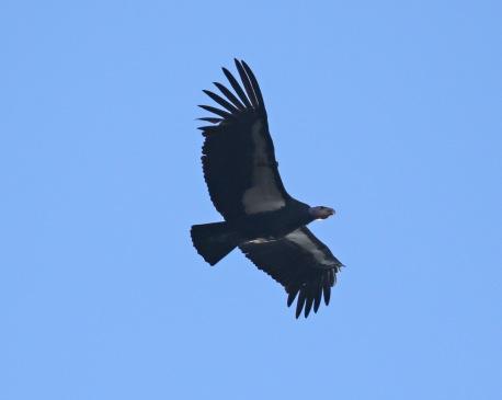 Condor Tag4a