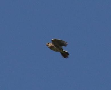 Skylark Flight1