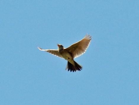 Skylark Flight2