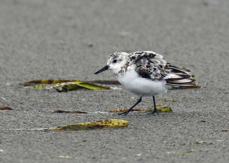 SAnderling Open Beach