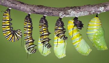 caterpillar-emerging