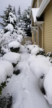 Edmonds Snow