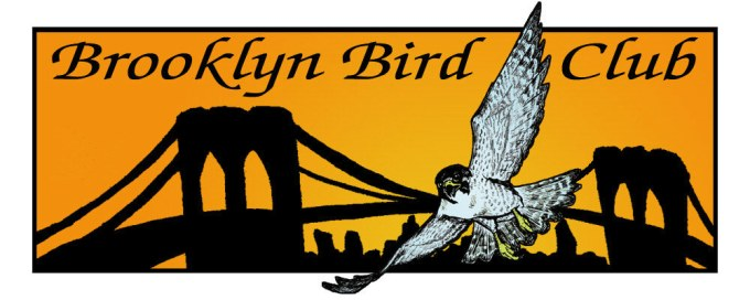 Brooklyn Birding Club
